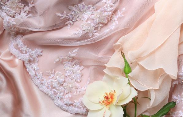 Фото обои роза, цветок, кружево, ткань