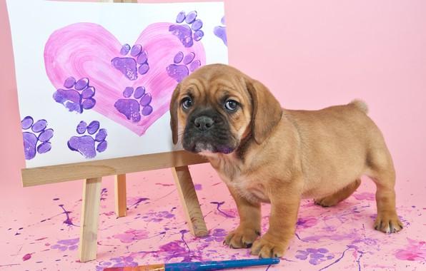 Картинка краски, картина, щенок, кисти