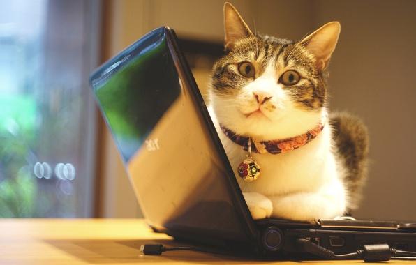 Картинка кошка, глаза, кот, взгляд, свет, уют, стена, портрет, техника, окно, офис, лежит, ошейник, мордашка, полосатый, …