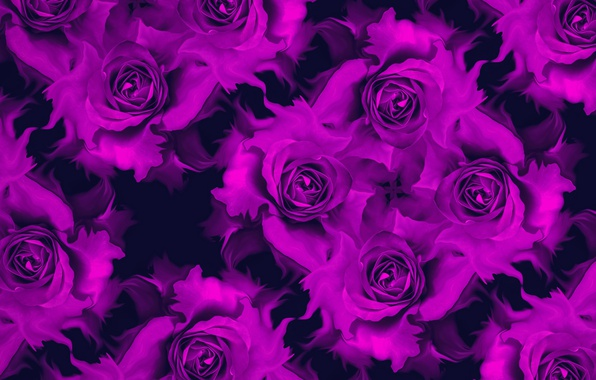 Картинка цветы, отражение, коллаж, роза, лепестки, бутон