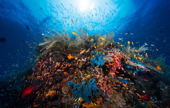 Картинка свет, рыбы, человек, кораллы, под водой, коралловый риф