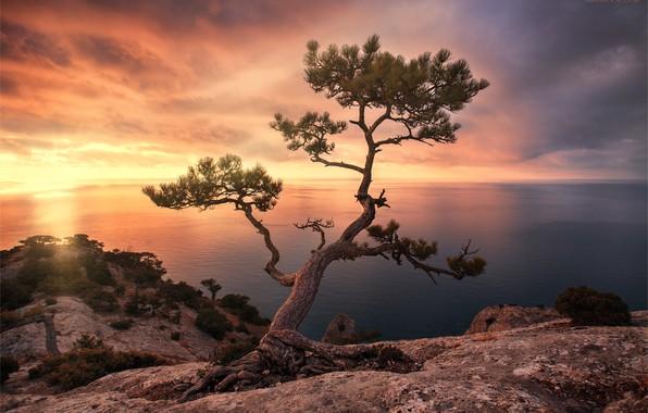 Картинка море, пейзаж, закат, скала, дерево