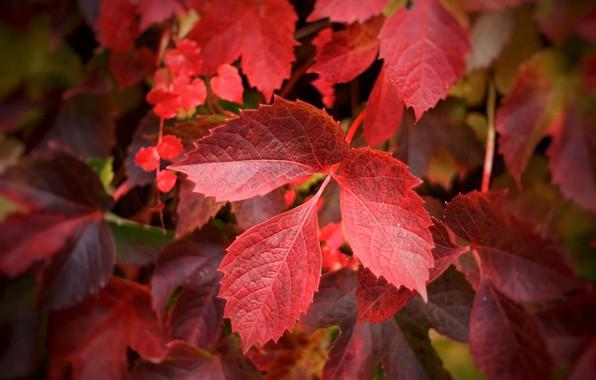 Картинка осень, листья, веточка