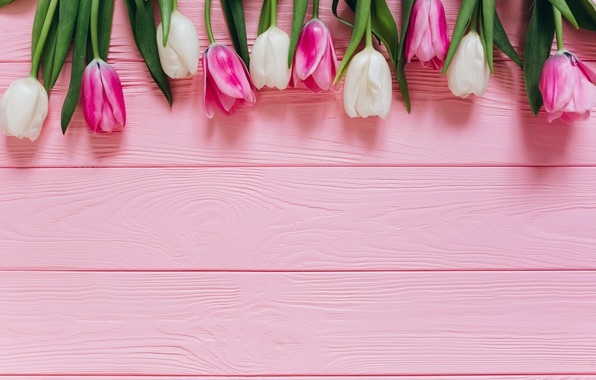 Фото обои Цветы, Тюльпаны, Фон, Бутоны
