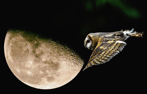 Картинка полет, ночь, сова, луна