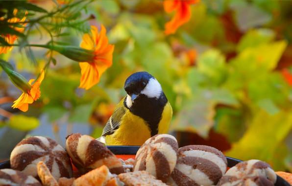 Картинка печенье, Птичка, Цветочки, Bird