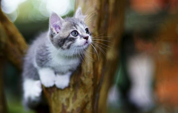 Картинка котенок, фон, милый