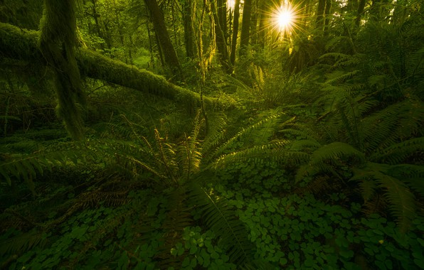 Картинка Green, Sun, Forest, Beams