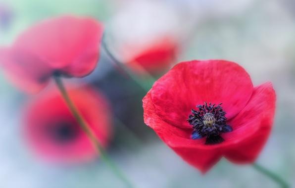 Цветы фото макро