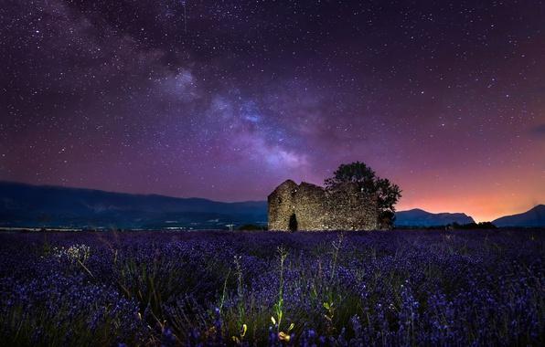 Картинка поле, небо, звезды, ночь, дерево, развалены, млечный путь, лаванда