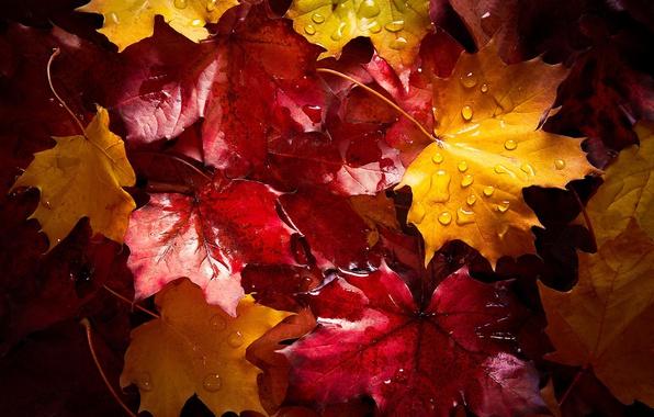 Картинка мокро, осень, капли, макро, листва, после дождя