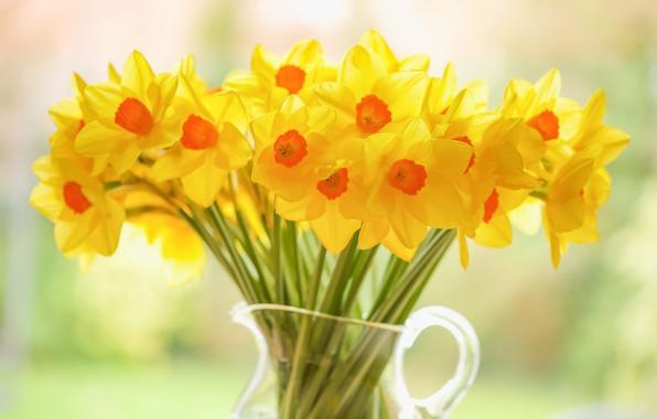 Картинка букет, кувшин, жёлтые, Нарциссы