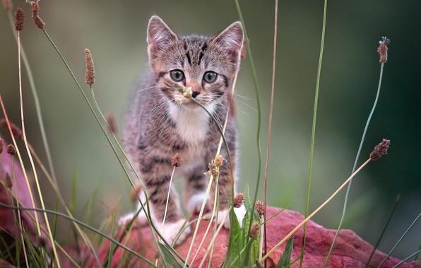 Картинка на камне, смотрит в камеру, полосатый котёнок