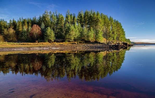 Картинка Отражение, Озеро, Деревья, Лес