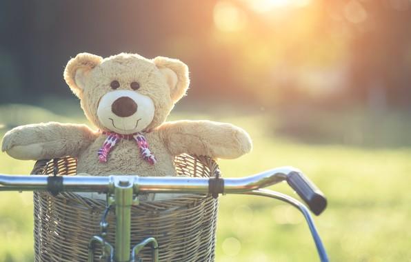 Картинка лето, закат, велосипед, корзина, игрушка, медведь, мишка, summer, vintage, bear, bike, retro, teddy, одинокий, cute, …