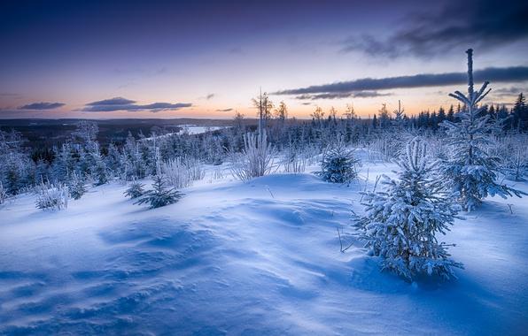 Картинка зима, снег, закат, ёлки