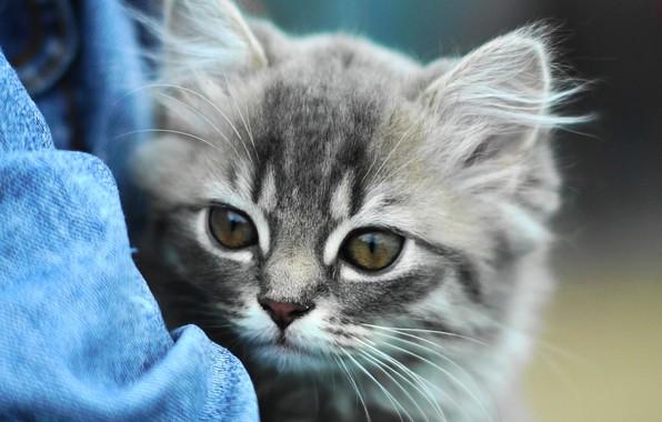 Картинка взгляд, котенок, глазки, милый