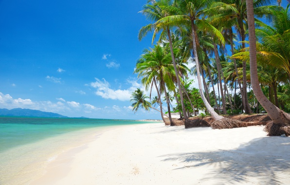 Картинка песок, море, пляж, солнце, пальмы, берег, остров, summer, beach, sea, island, sand, paradise, palms, tropical