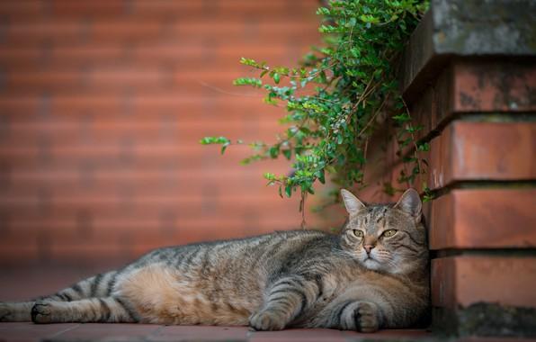Картинка кошка, отдых, расслабон