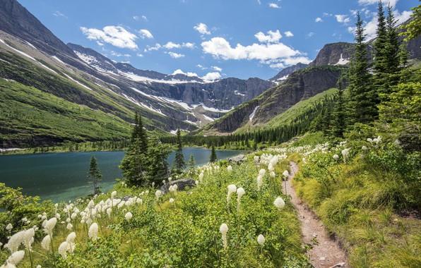 Картинка цветы, горы, природа, озеро, красота, луг