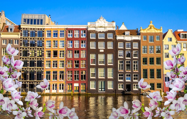 Картинка река, весна, Амстердам, цветение, blossom, Amsterdam, flowers, old, spring, buildings, Netherlands, canal