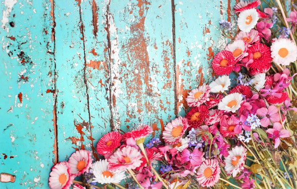 Картинка цветы, фон, доски, хризантемы