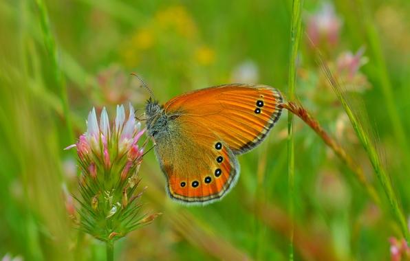 Картинка Макро, Весна, Бабочка, Spring, Macro, Butterfly