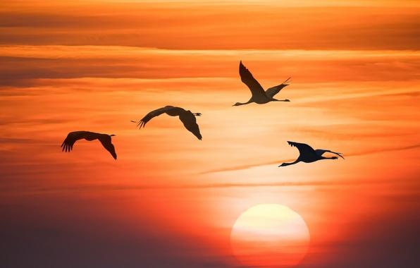 Картинка небо, закат, птицы