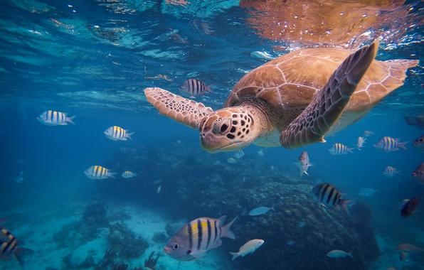 под водой океана картинки