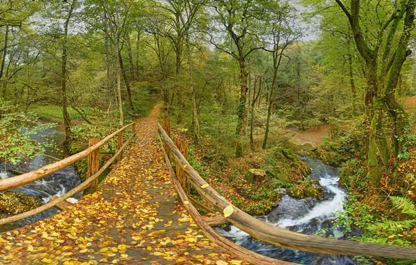 Картинка осень, лес, листья, деревья, мост, парк, река, Германия, Germany, Рейнланд-Пфальц, Rhineland-Palatinate, Лайенкауль, Leienkaul