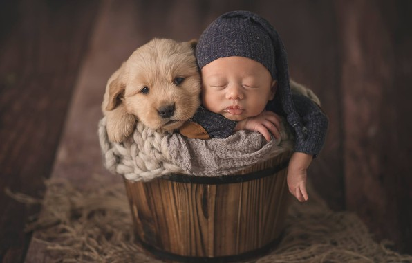 Картинка настроение, сон, собака, малыш, щенок, ребёнок, шапочка, младенец, кадка, спящий