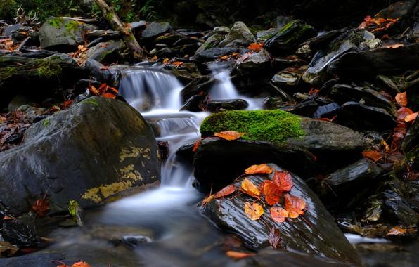 Картинка Природа, Поток, Осень, Река, Лес, Листья, Камни