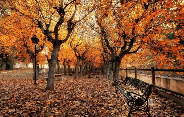 Картинка осень, город, улица, скамья