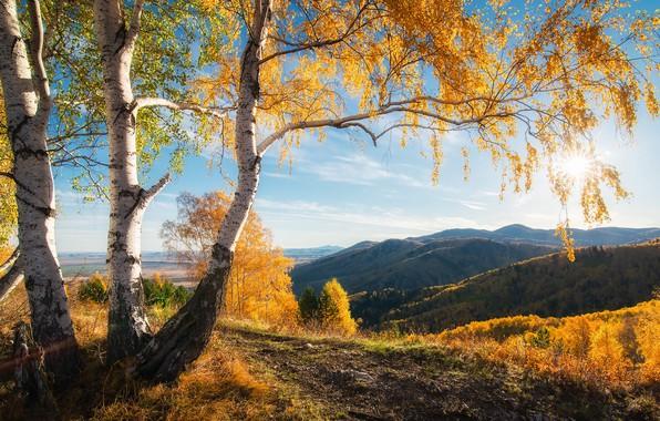 Картинка осень, солнце, деревья, горы, красота