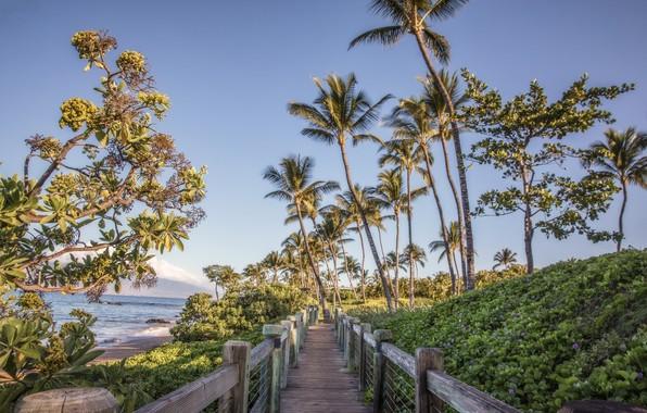 Картинка цветы, мост, тропики, пальмы, дорожка, перилла