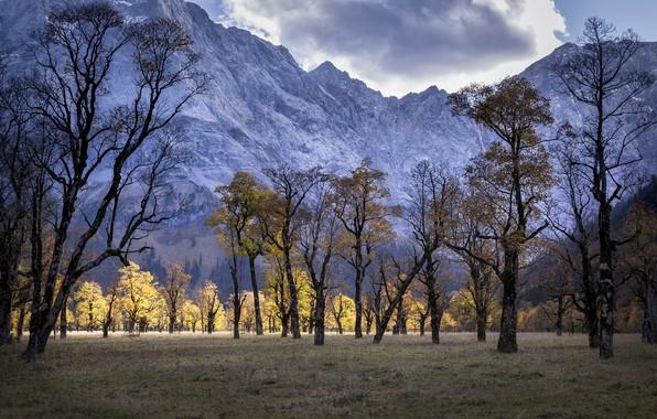 Картинка деревья, горы, природа
