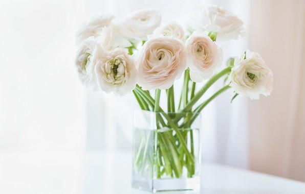 Картинка цветы, ваза, белые, ранункулюс, азиатский, лютик