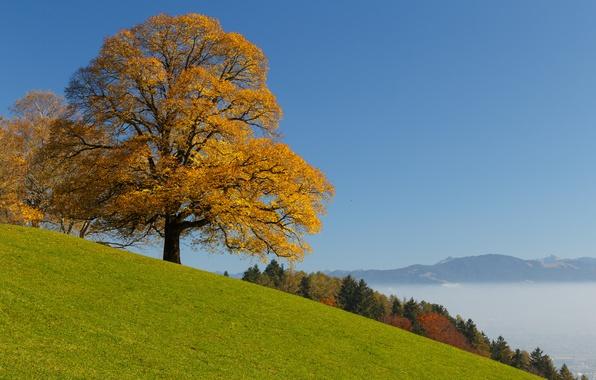 Картинка осень, лес, дерево, Швейцария