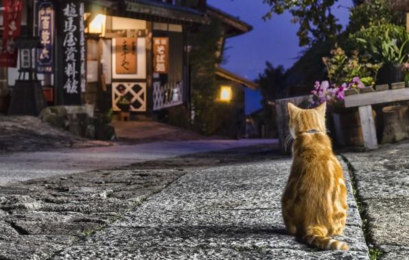 Картинка кошка, дом, улица