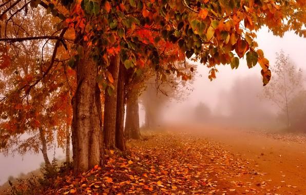 картинки осень листопад на рабочий стол