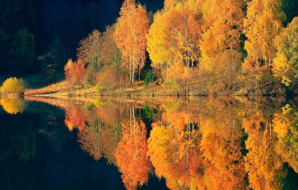 Картинка осень, лес, отражения, деревья, природа, река, краски