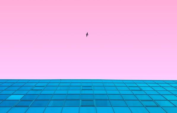 Картинка небо, полет, стиль, фон, розовый, птица, здание, вид