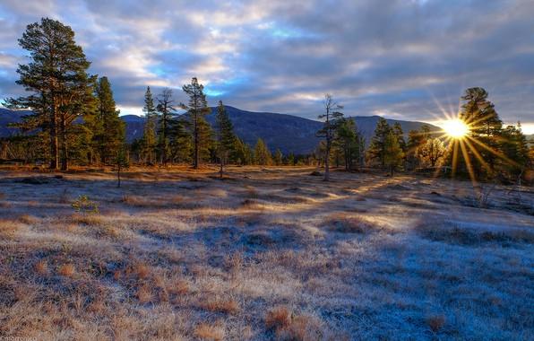 Картинка иней, лес, небо, трава, солнце, облака, лучи, деревья, горы, рассвет, поляна