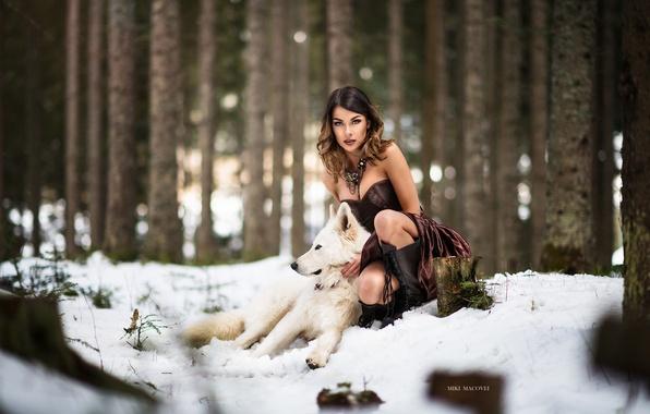 Картинка зима, лес, девушка, снег, волк, собака, платье