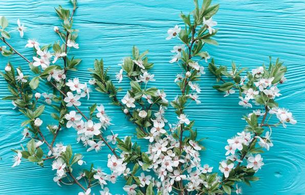 Картинка цветы, ветки, apple, весна, white, белые, яблоня, wood, blossom, flowers, romantic, spring, tender