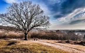 Картинка природа, дерево, скамья