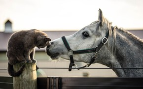 Картинка кошка, конь, друзья