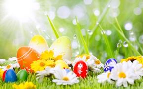 Картинка Ромашки, Пасха, Яйца, Праздники