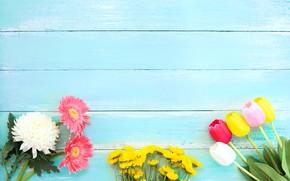 Картинка Цветы, Тюльпаны, Гербера, Хризантемы