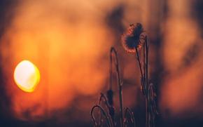 Картинка солнце, закат, Sunset, травинка, боке, Sonnenuntergang, ☀